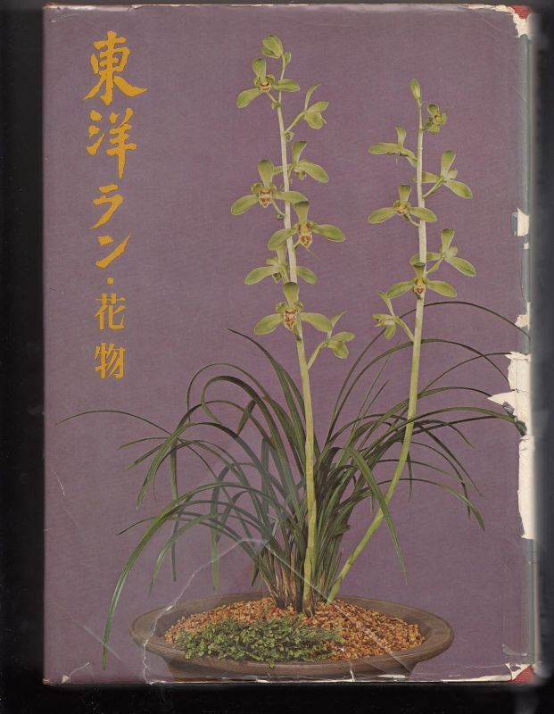 Dictionary Of An Oriental Orchid The Kind Which Makes A Flower Bloom